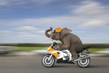 Elephant on a Motorcycle