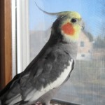Profile picture of Willie Bird